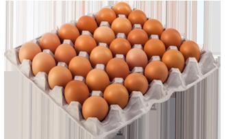 سعر مبيعات البيض اليوم في بورصة الحمامي